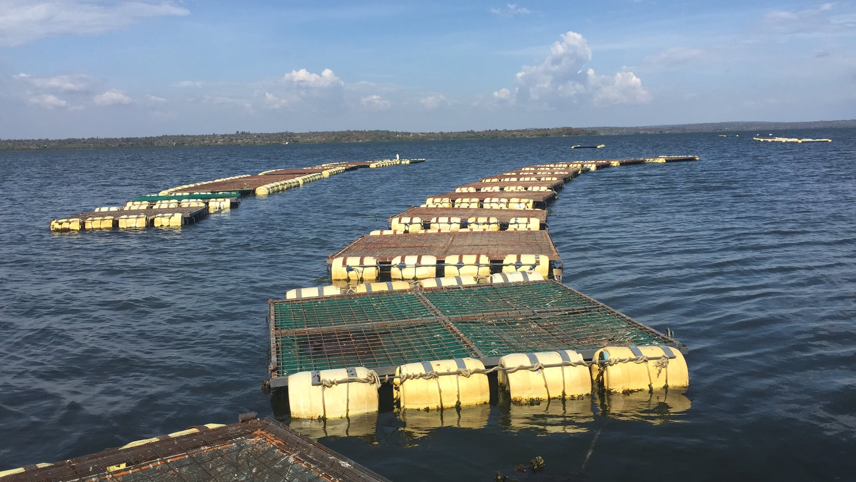 Cages of Hope on Lake Victoria