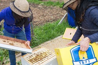 Bee Hive Installed in On-campus Garden