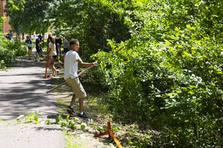Students at Living the Questions remove buckthorn on campus.