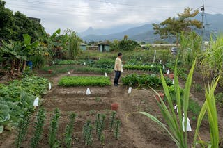 Alison Lo's farm