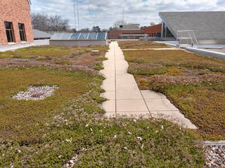 The Bethel Green Roof is made of 15 different species of sedum, a type of succulent.